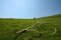 Branch on grassland