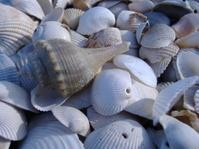 Lots of Shells 5