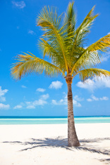 Lone palm tree on beach