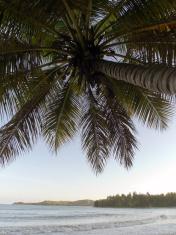 Haiti, Aquin, sunset with coconut palms.