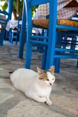 Greek cat in restaurant