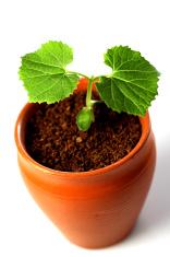 Plant -New life