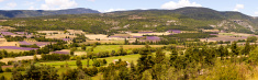 Panoramic view of lavender fields in Provence