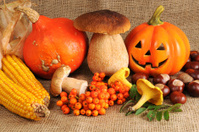 Red Hokkaido halloween pumpkin with chestnuts and mushroom