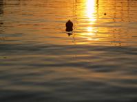 Golden sunset reflections