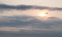 Big Bird takes flight