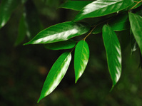 Rare plants leaves