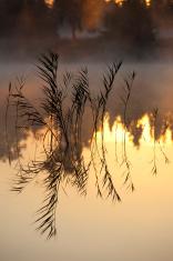 Lake Scene At Sunrise