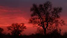 Tree silhouette at sunrise