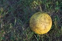Old Yellow Ball