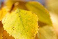 close up of yellow fall foliage
