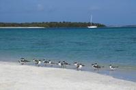Seagulls in tropical beach