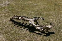 Skeleton in Tibet