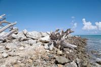 Driftwood in Bermuda