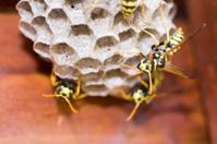 Bees Make a Hive