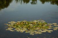 Green plant around the lake