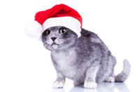 curious cute cat wearing a santa hat