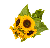 bight sunflowers bouquet