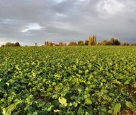 Rural landscape under cloudy skies