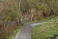 Country Lane & Gate