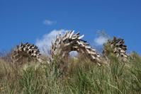 Dead Palm Trees
