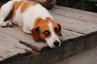 lying sad stray dog