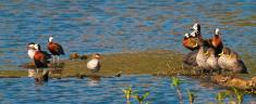Group of ducks at dam