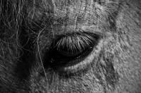 Horse eye closeup