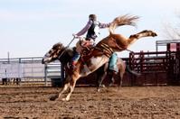 Photo Cowboy on Bucking Bronco