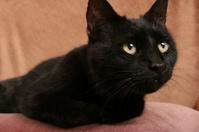 Black Cat Curious
