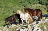 Wild Stallions fight