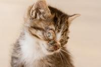 sick kitten with eye disease