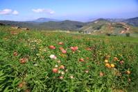 Colourful flora on mountain