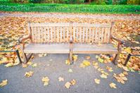 Bench In St James Park, Autumn, London.
