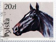 Black horse head.
