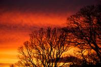 Bare winter trees at sunrise
