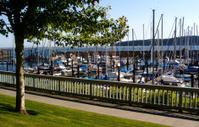 Small Boat Marina From Walkway