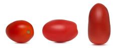 Three Plum Tomatoes