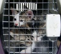 Kittens in pet carrier