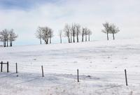 Crisp Winter Afternoon Landscape