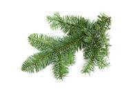Bare christmas twig