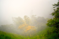 Colombia Cloud Forest