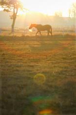 Flare horse