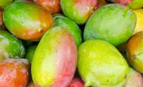 Mangoes from a Hawaiian Public Market