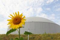 bio gas power generator with daisy sun flower