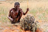 Kalahari bushman with hoodia plant landscape