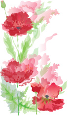 Poppies in watercolor effect