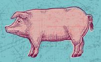 Hog Pig Pork Grunge