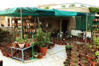 Urban Organic Vegetable and Herbs Garden in Balcony