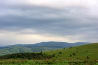 undulating grassland